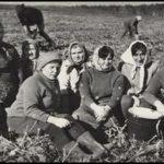 Коллектив библиотеки на уборке урожая 1971 г.